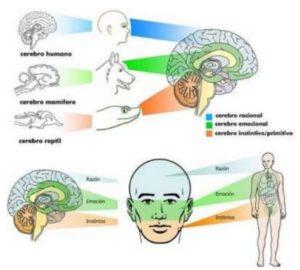 neurocienia_cerebro
